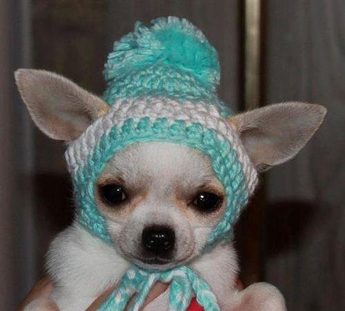 Crochet Doll Amigurumi Bunny with Tiny Teddy Bear  7e2bc9e4f70