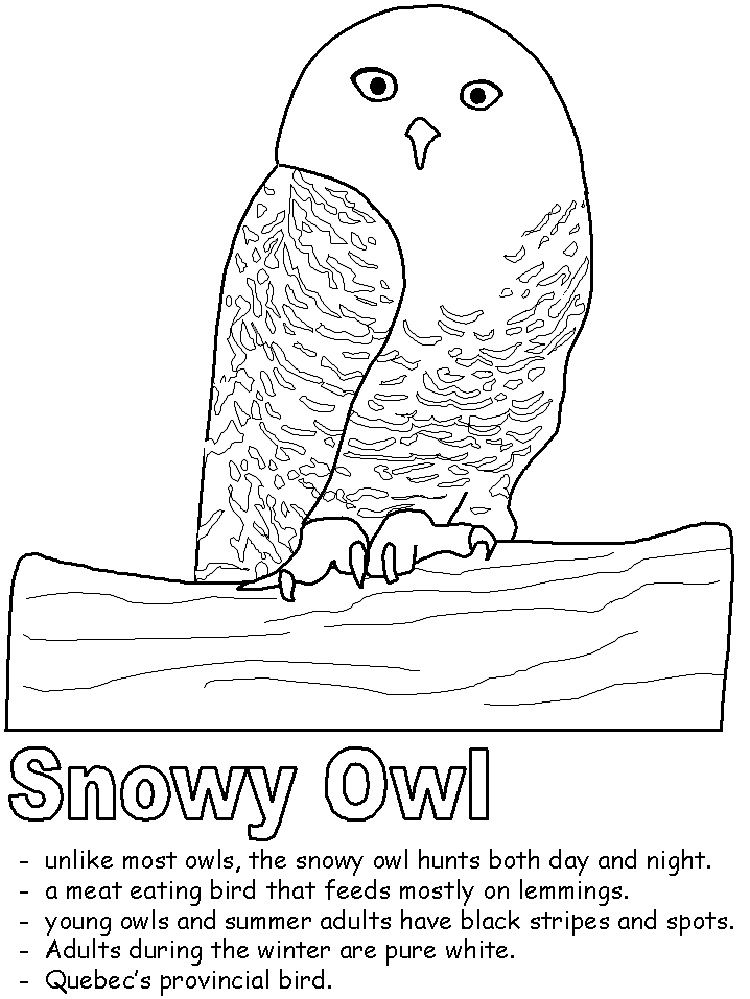 Snowy Owl Coloring Pages Prinzewilson Com Snowy Owl Owl Facts