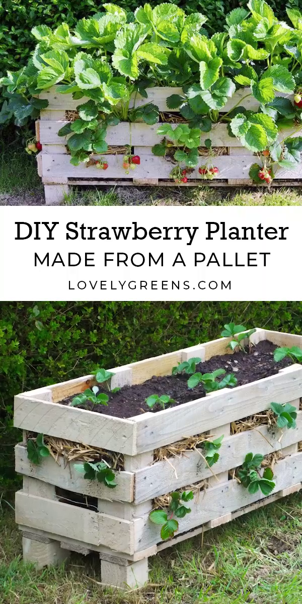 Photo of 🍓 Strawberry planter DIY –  There is a simple way to turn an old wooden palle…