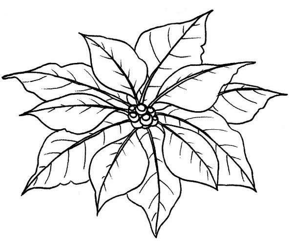 Poinsettia Leaves Of Poinsettia Coloring Page Christmas