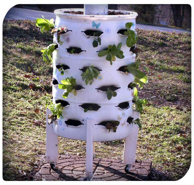 Diy vertical garden planter from a 55 gallon plastic for Vertical garden planters diy