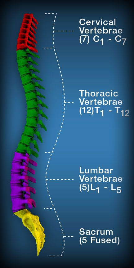 Ligaments Around The Spine Manual Guide