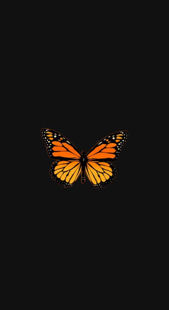 cute aesthetic vsco orange yellow butterfly black ...