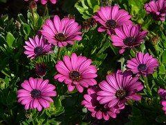 Gerbera, Flowers, Plant, Summer