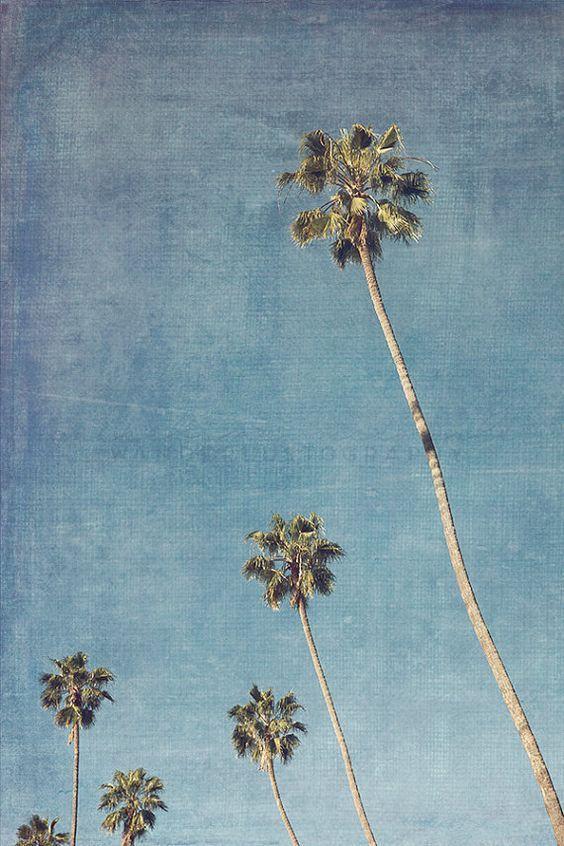 Hill Drive Palms 2 - Photographic Print - Palm Tree, Los Angeles, California, Bohemian, Eagle Rock, blue, boho, travel, Wall, Decor, Hanging