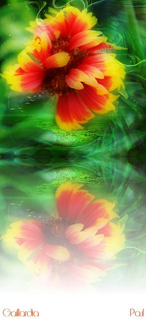 Dream in red yellow and green by PaulO Classic. ©, via Flickr