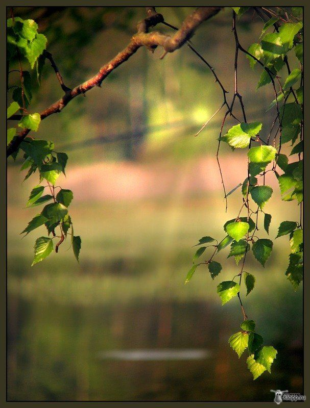 Bereza Dslr Background Images Best Background Images Photo Background Images