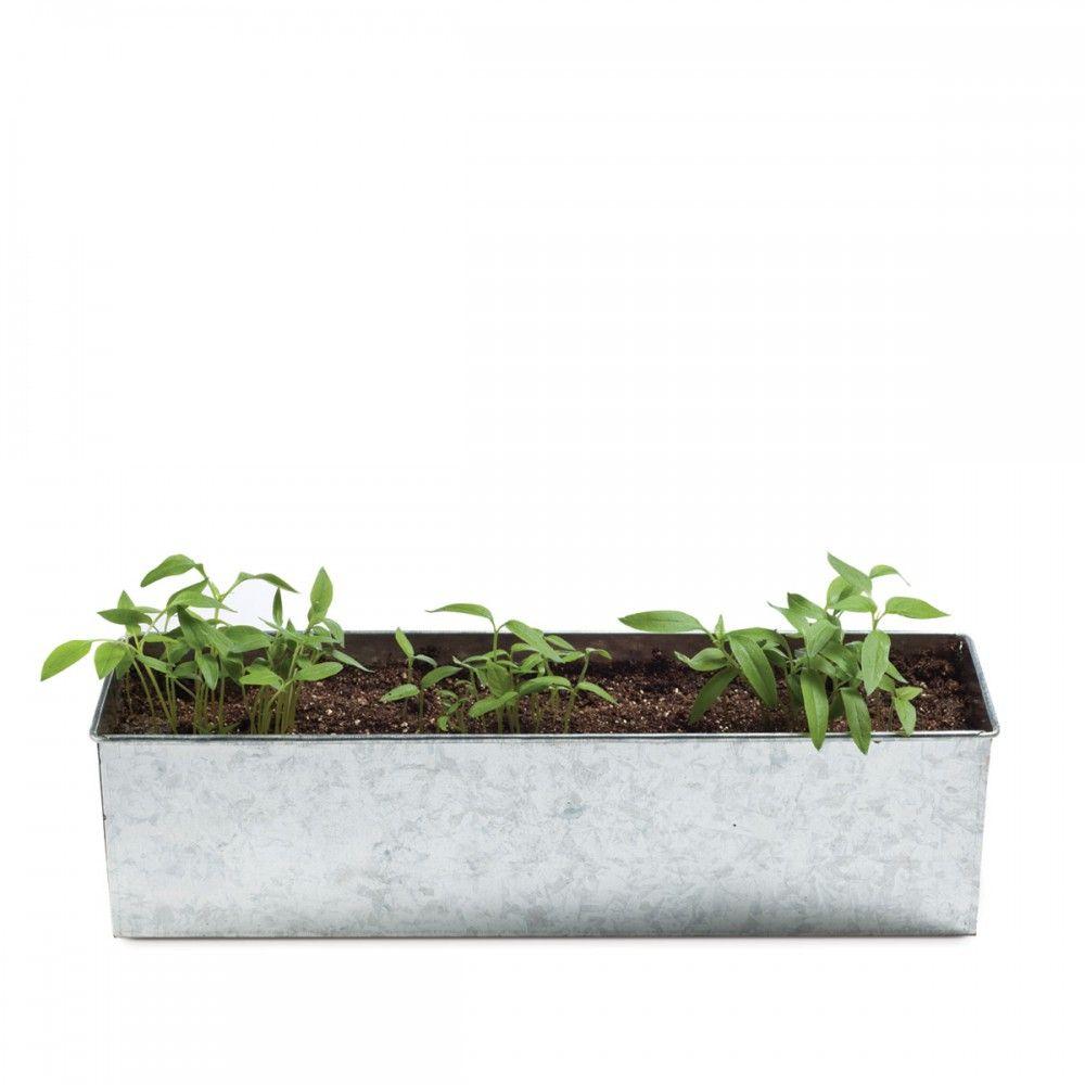 Foodie garden pepper growing kit - merci