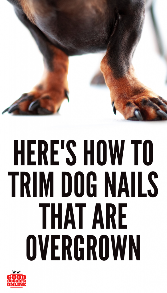 How To Trim Your Dog S Nails When They Are Overgrown Good Doggies Online Dog Nails Good Doggies Online Trimming Dog Nails