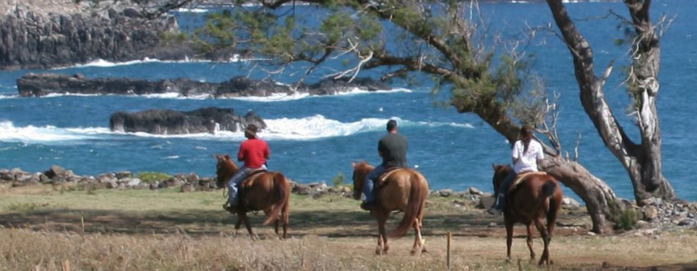 Horseback Riding On The Beach In Maui Oh Yeah Must Do