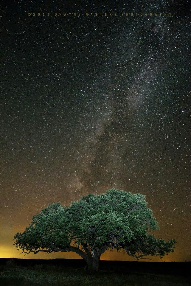 Albany TX at night....wow!! Live oak trees, Night