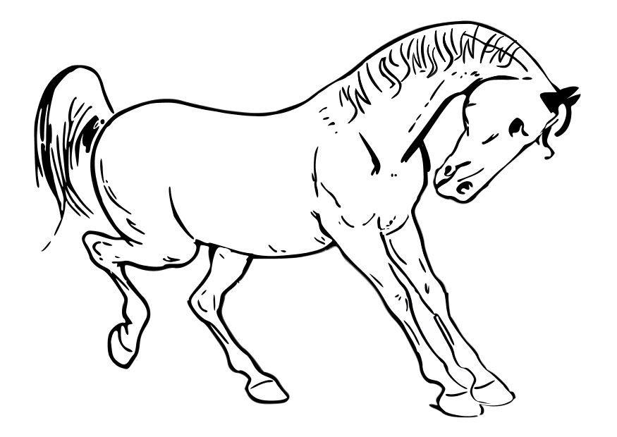 Worksheet. caballo para pintar en tela  Buscar con Google  caballos
