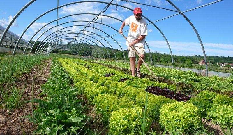 Prepare To Make Your Farm Certified Organic Organic