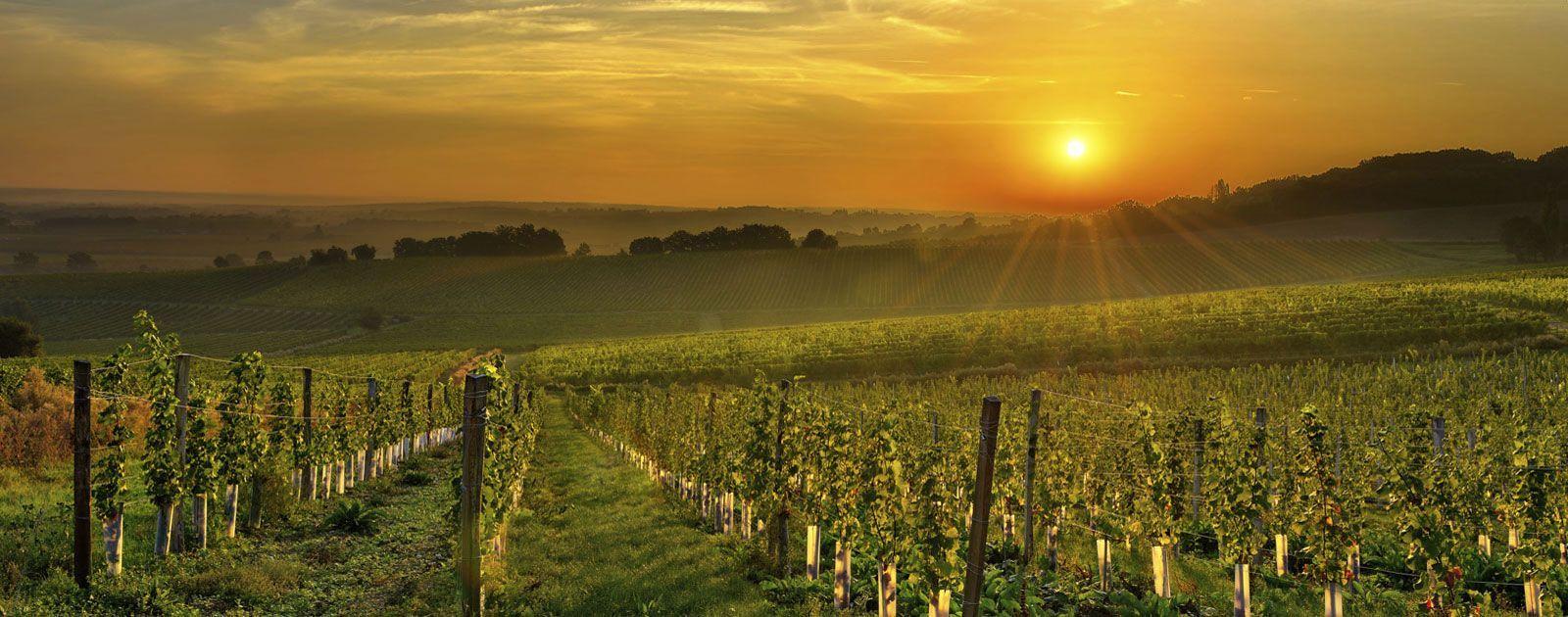 Allegretto vineyard resort paso robles california