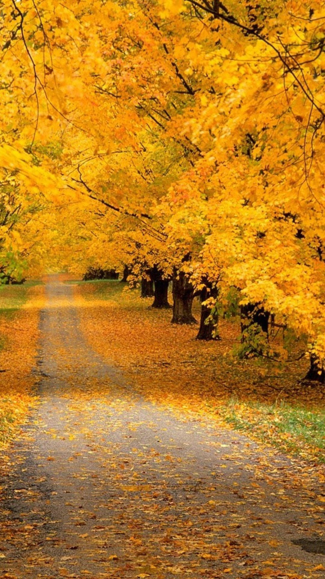 Trees Park Autumn Leaves Yellow Track Fall Pictures Beautiful Nature Autumn Scenes
