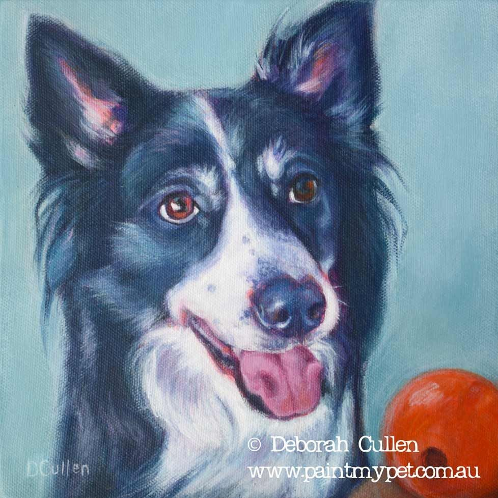 Lochie Border Collie Dog Portrait Perros
