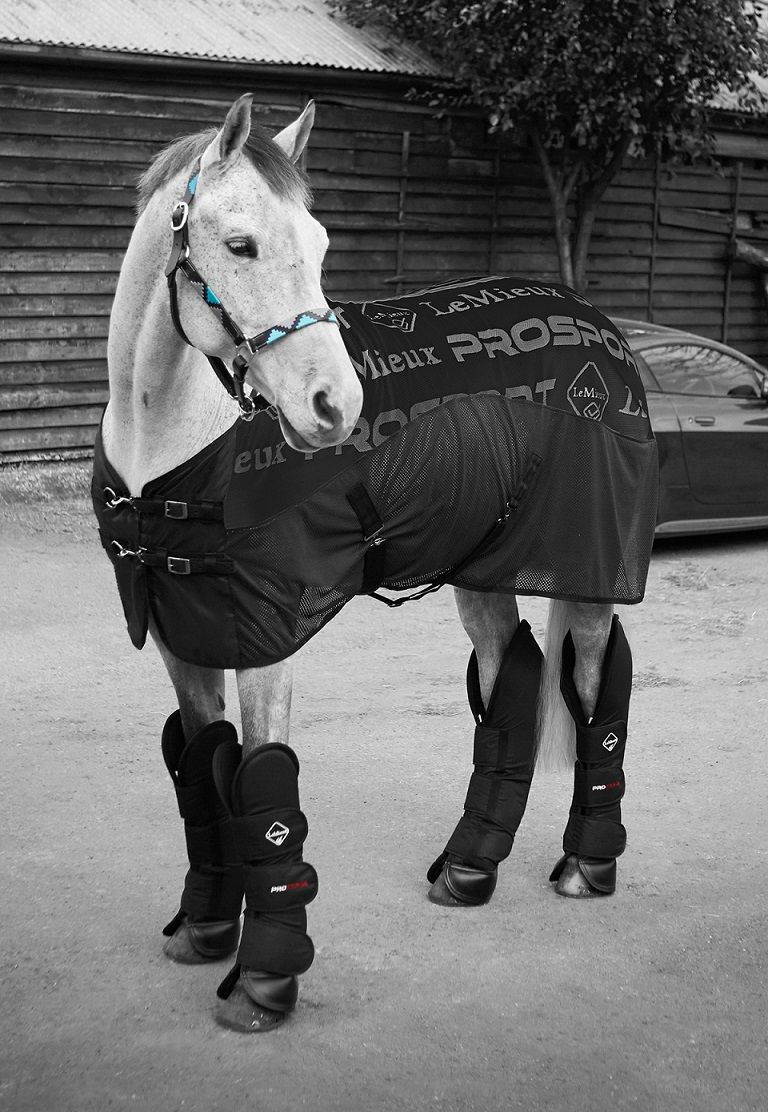 Lemieux Carbon Cooler Rug 44 95 Horse Health The Finest Equestrian Products In Uk