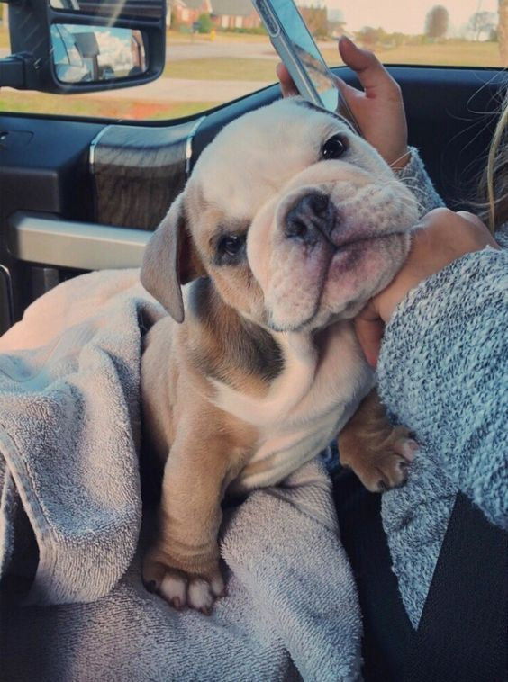 58 Adorable Animals To Help Get You Through The Day Cute