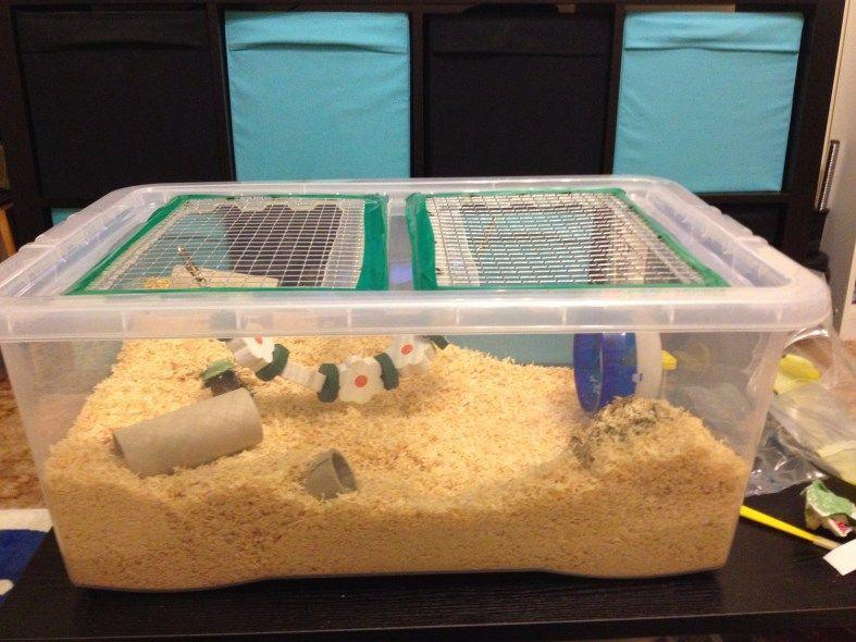 Make A Hamster Cage In 2020 Hamster Cage Hamster Care Hamster