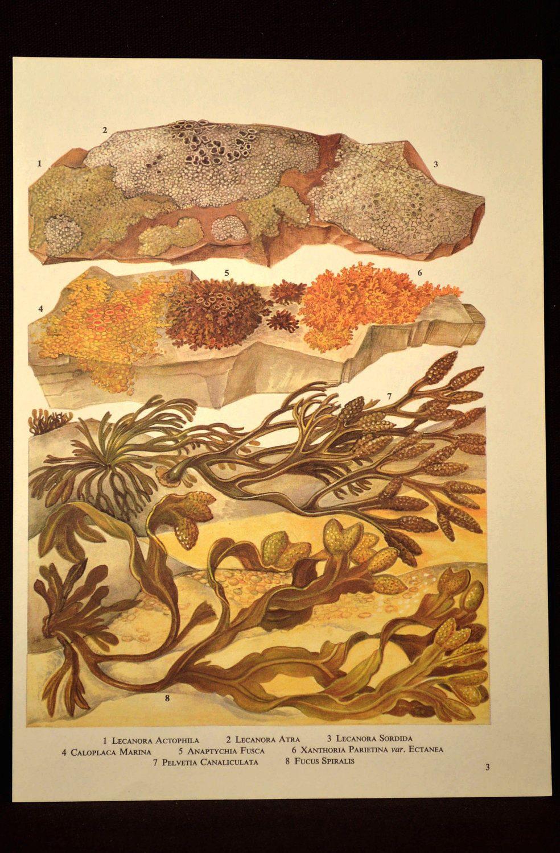 Ocean Plant Print Seaweed Wall Decor Beach House Wall Art | Nature ...