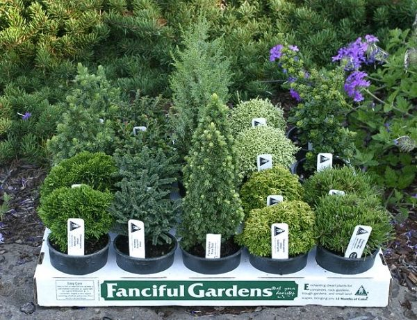 Mini trees for your mini garden by debbie fairy boards - Miniature plants for fairy gardens ...
