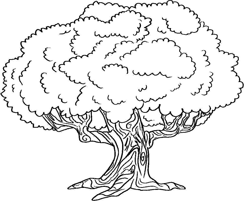 Environment Large Tree Oak Tree Drawings Tree Coloring Page Tree Drawing