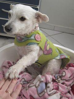 KIDS INDOORS: Roupa para cachorro #pet {bem fácil de fazer}