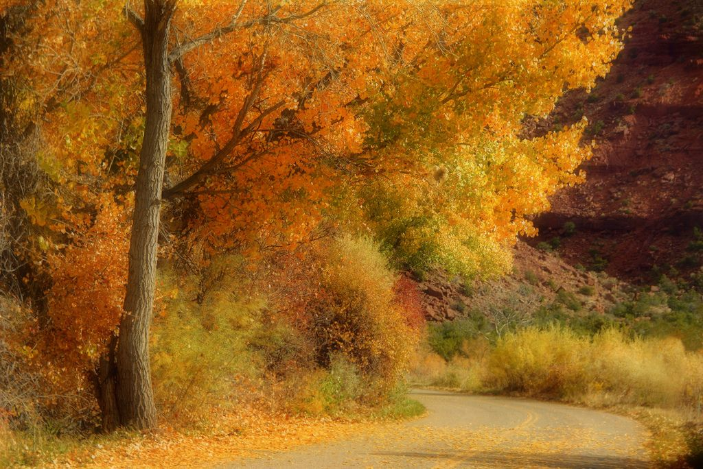 Jemez Mountains, New Mexico, USA Fall On Road (by nmjeeptours)
