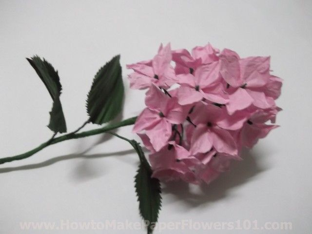How to make your own paper flowers paper hydrangea flowers pictures how to make your own paper flowers paper hydrangea flowers pictures mightylinksfo Gallery