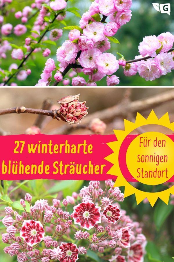 Winterharte blühende Sträucher