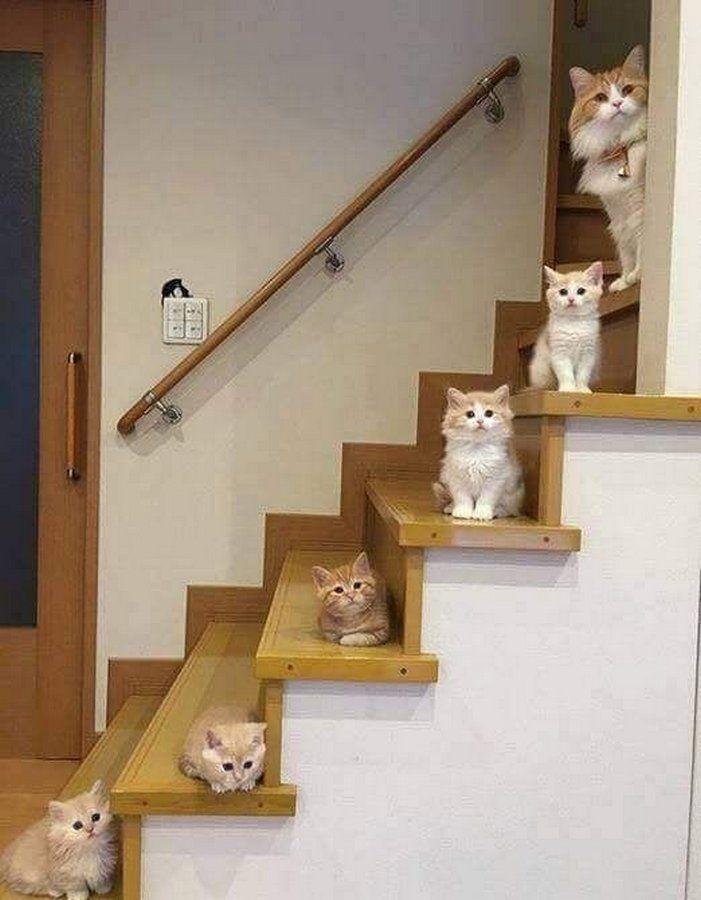 Прикольные картинки со всего мира | Сумасшедшие кошки ...