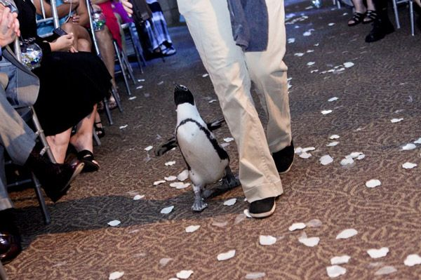 Florida Wedding Venue The Aquarium In Tampa Have A Penguin Follow You Down
