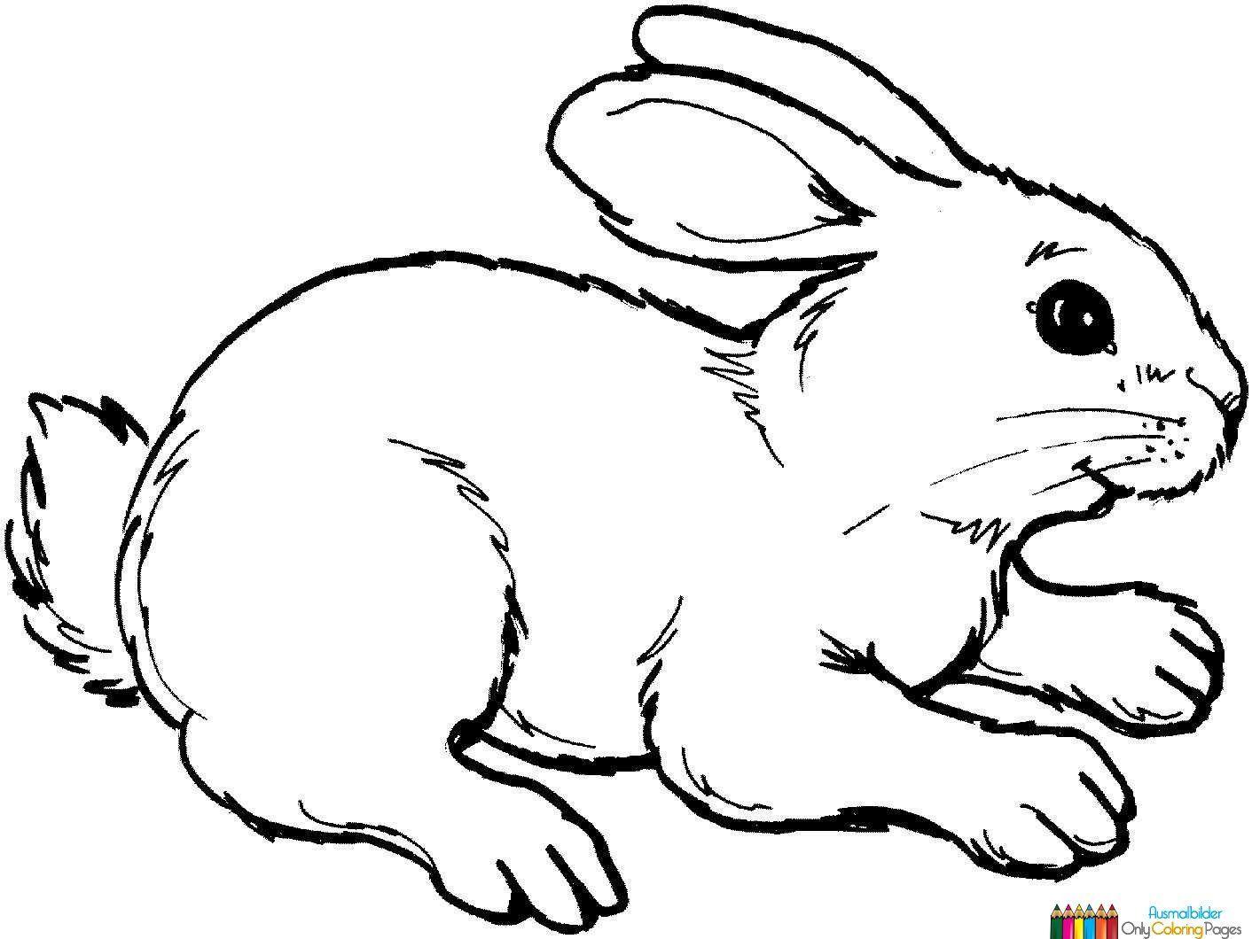 Ausmalbilder Kostenlos Ausdrucken Kaninchen Ausmalbild Hase Malvorlagen Tiere Tiervorlagen