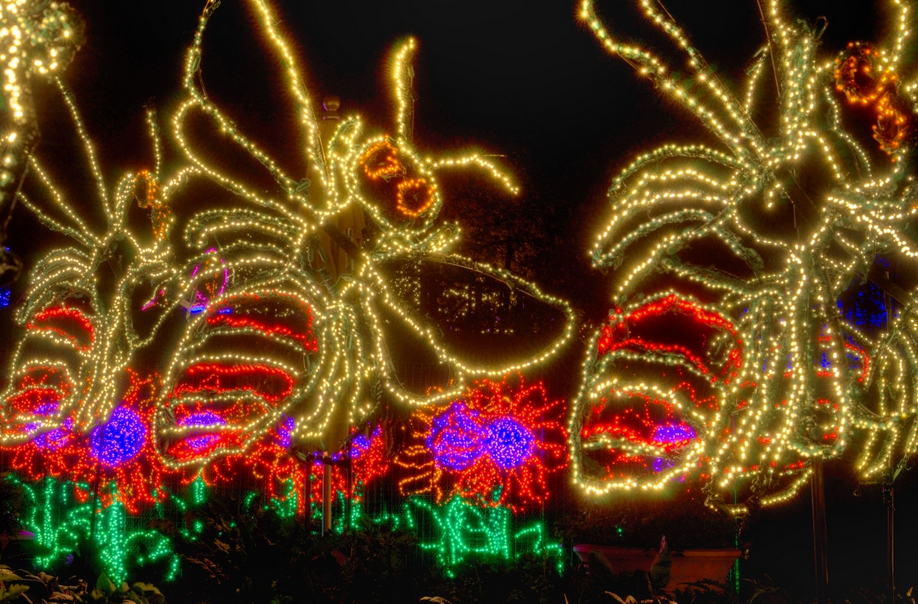 Images Of Garden Lights At The Botanical Gardens In Atlanta   Google Search