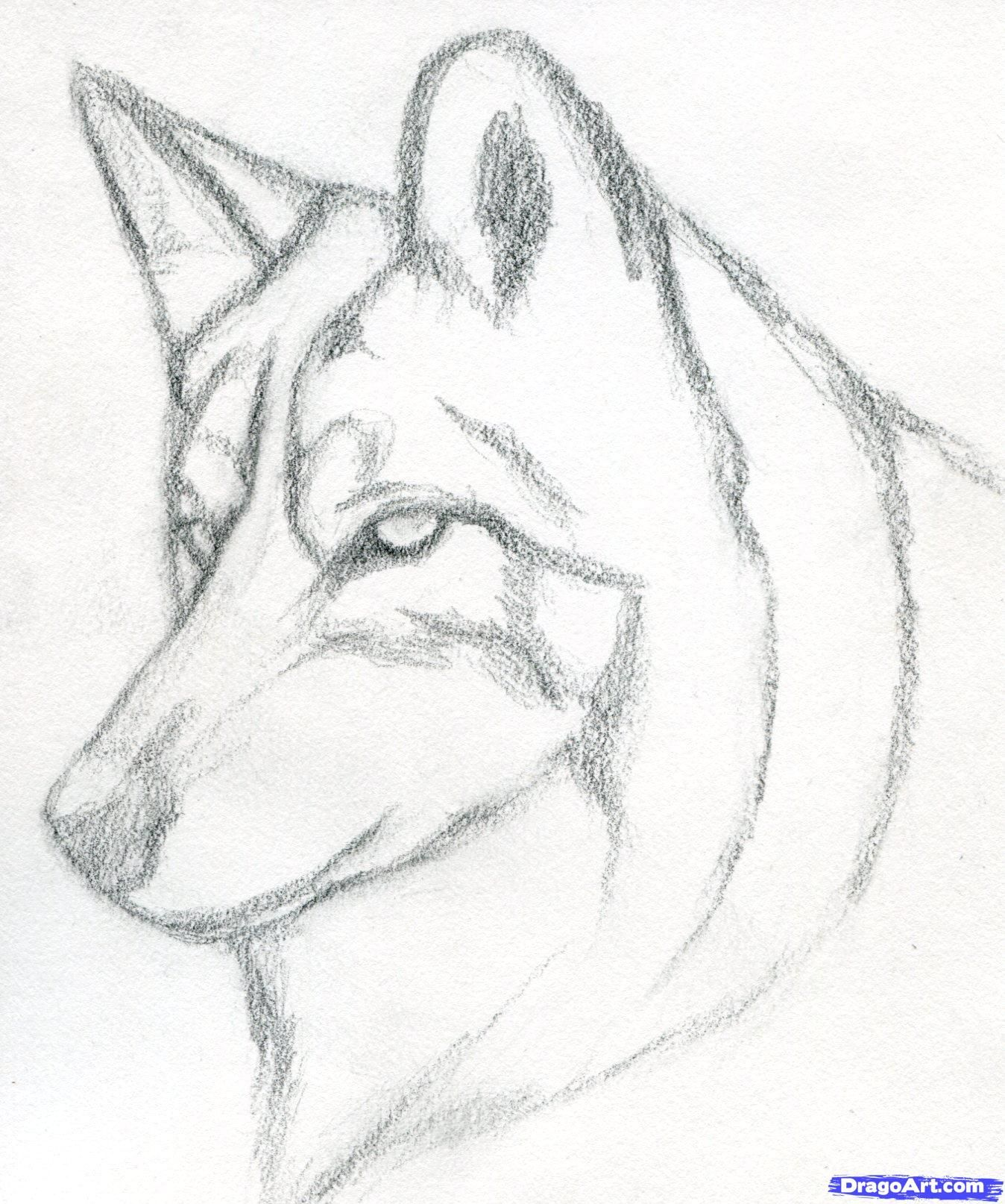 1348x1614 Pencil Drawing Of Wolf Wolves To Draw Step 9 How To Draw Pencil Drawings Easy Dog Drawing Simple Wolf Drawing Easy