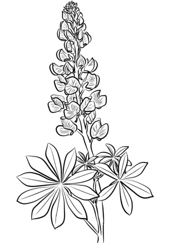 Image Result For Lupine Blossom From Top Flower Coloring Pages Flower Line Drawings Lupine Flowers