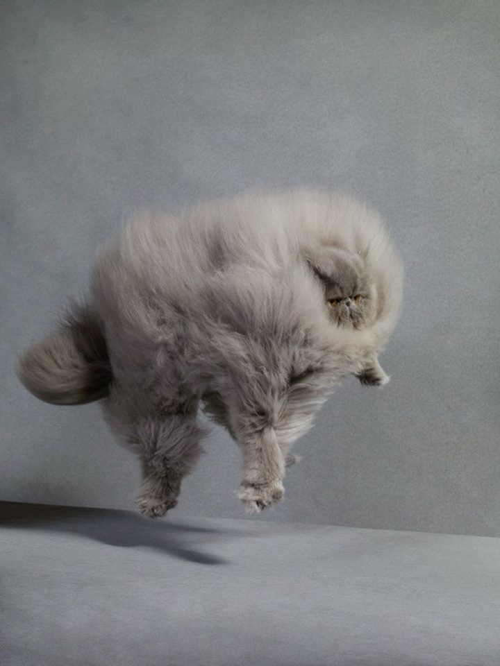 Image of: Gif Animals Without Necks Funny Junk Animals Without Necks Animals Without Necks