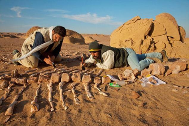 Miocene Google Search World heritage sites
