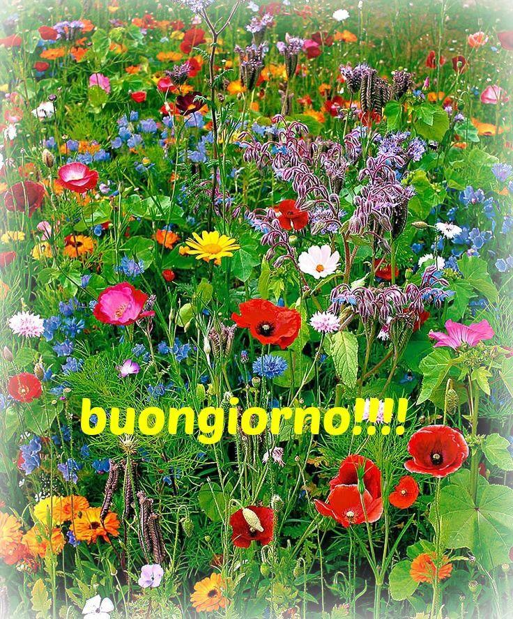 un bel buongiorno col colore dei fiori