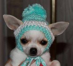 Image Result For Dog Hat With Ear Holes Free Crochet Pattern Hat