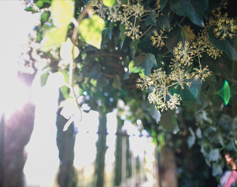 Entlang Der Rebzeilen Zypressen Mediterran Gartenhochzeit Gartenzeit Vineyards Vineyardwedding Trauung S In 2020 Mediterraner Garten Zypressen Garten