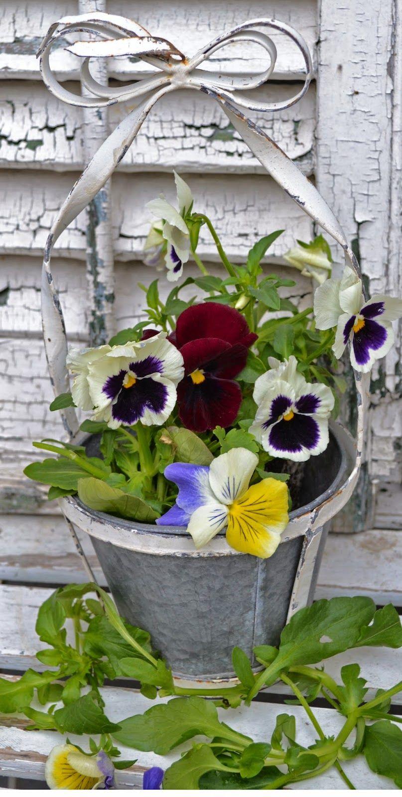 Art In The Garden Pansy Love Pansies Garden Gifts Gardening