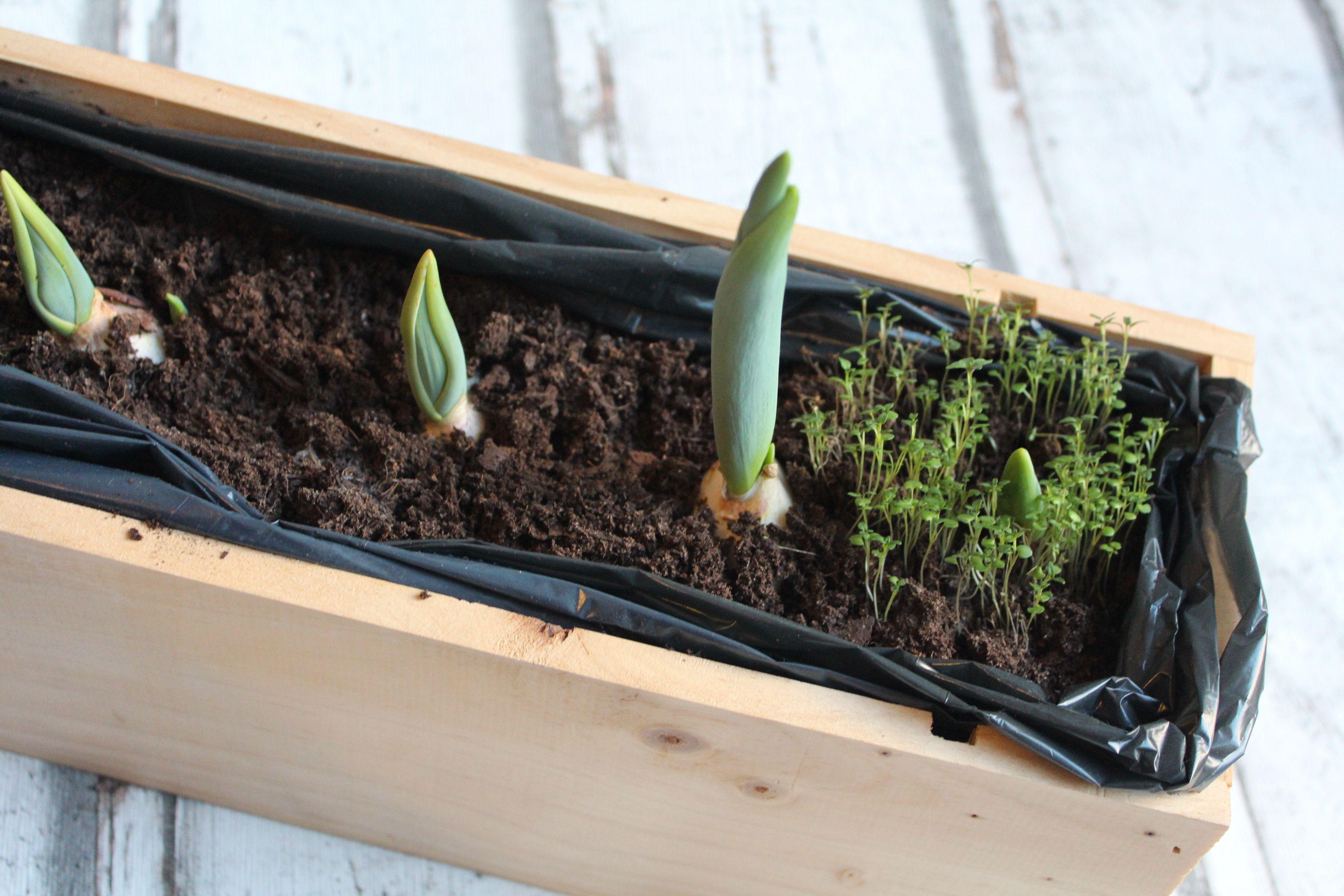 Planter Dans Une Caisse En Bois diy garden jardin jardiniere plants plantes flower fleur