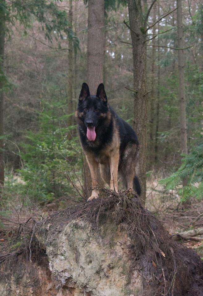 Foto Van Ingrid Rid Nederland Animals Dogs German