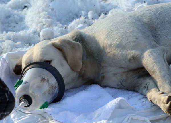 Limaohio Com Lima Oh Www Limaohio Com Yellow Labrador Retriever Dog Paws Labrador Retriever