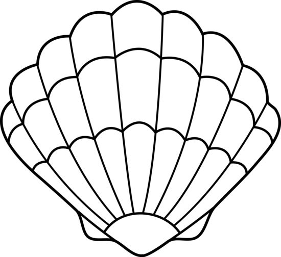 J31qimh0h Jpg 550 504 Conchas De Mar Dibujo Mar Para Colorear Conchas De Mar