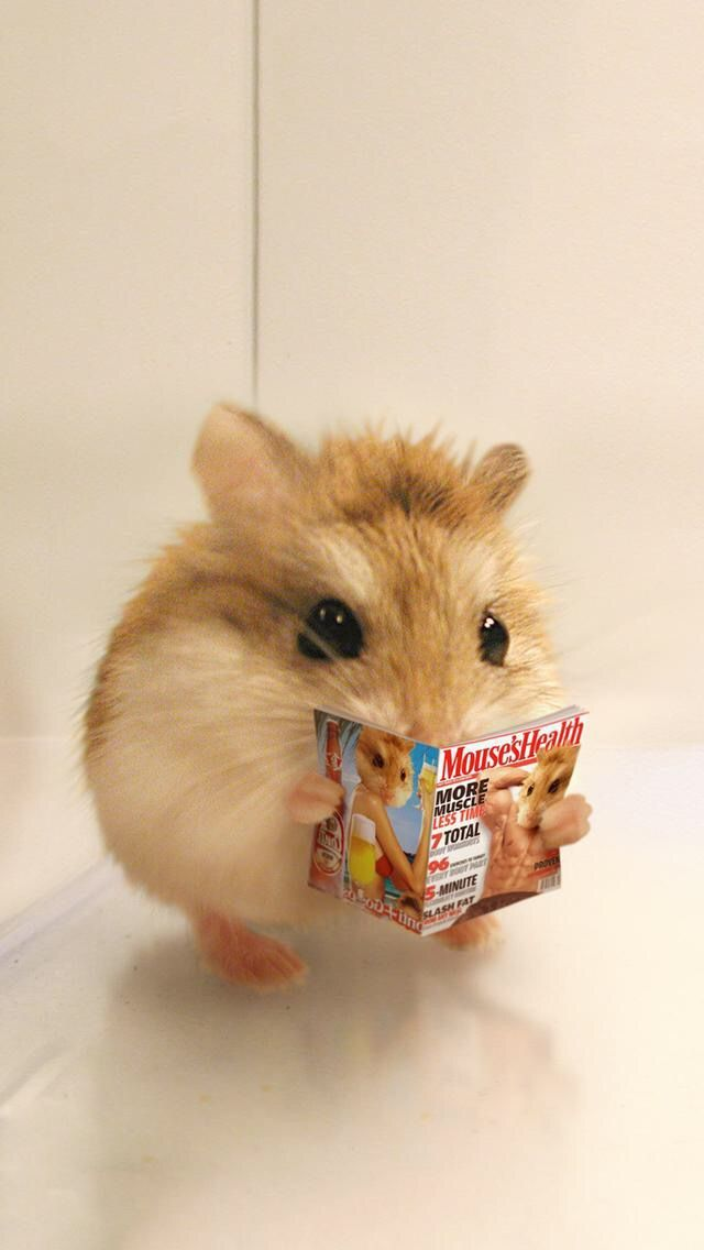 Pin By Af Powell On A Trier Cute Hamsters Super Cute Animals Cute Little Animals