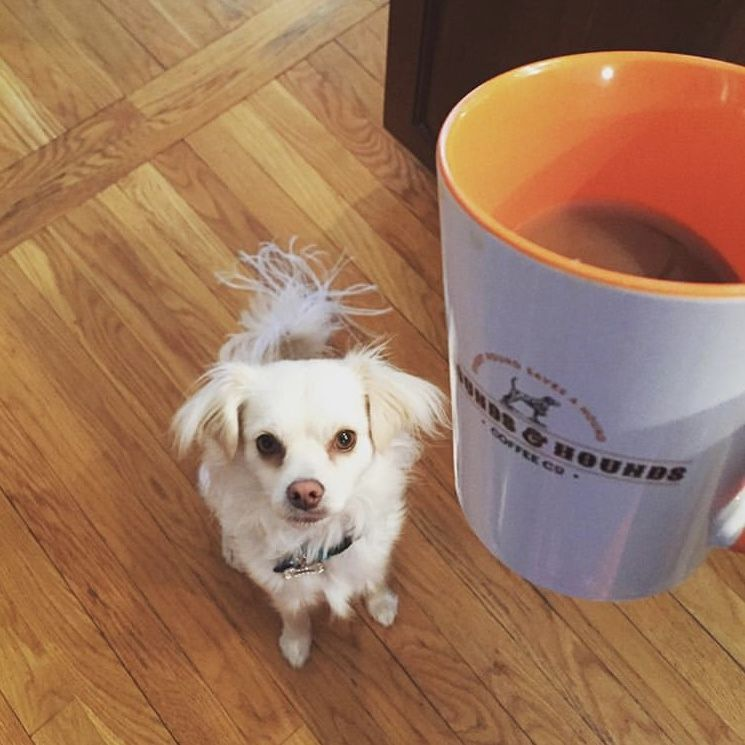 """""""My"""" Mug Coffee hound, Mugs, Coffee cups"""