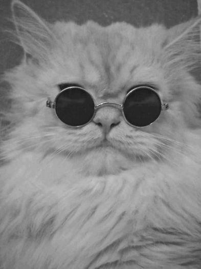 Gato psicodelico.