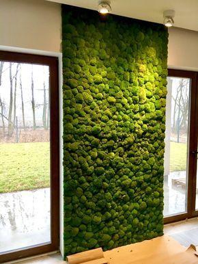 Mech Na ścianie Rośliny W 2019 Walled Garden Ceglane